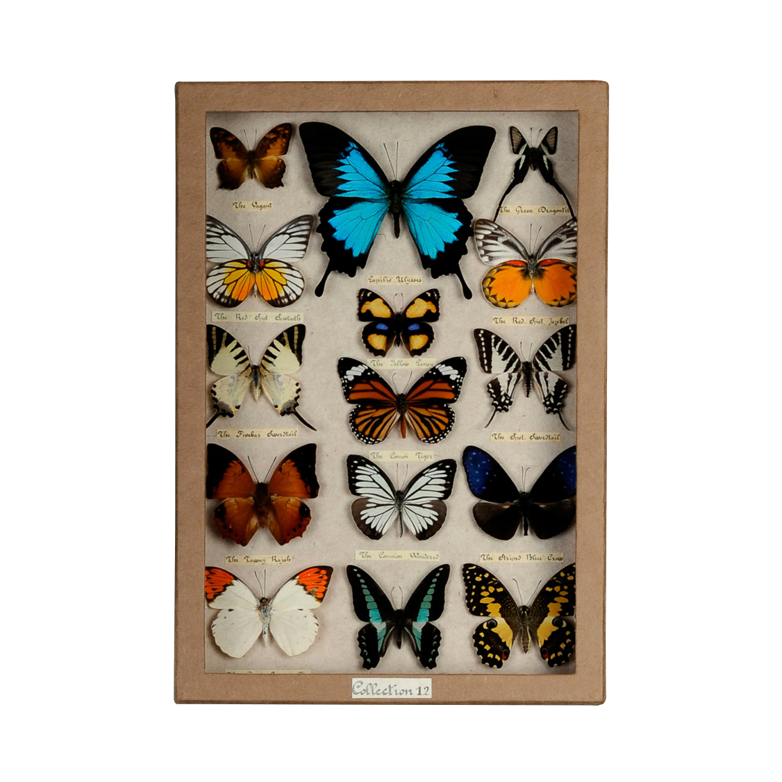 rVIdcIsriQ_Butterfly_Party_Collection_Box-Blue_Swallowtail0